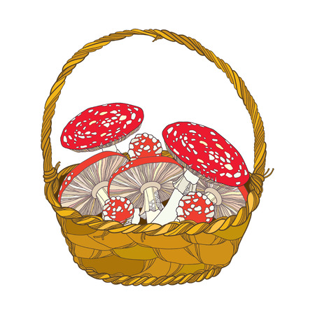 mycology: Wicker basket with Amanita or Fly agaric mushroom isolated on white. Outline poisonous red-cup mushroom in line art. Floral elements in contour style for autumn design.