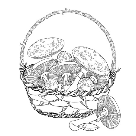 mycology: Wicker basket with Amanita or Fly agaric mushroom isolated on white. Outline poisonous red-cup mushroom in line art. Illustration