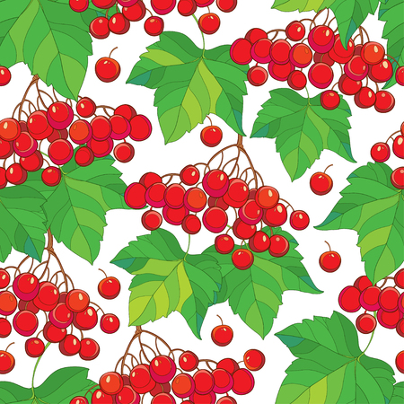 Vector seamless pattern with bunch of Viburnum or Guelder rose, green leaves and red berry on the white background. Floral background with viburnum in contour style for autumn design.