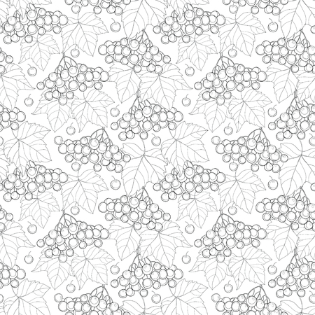 guelder rose: Vector seamless pattern with outline bunch of Viburnum or Guelder rose, leaves and berry on the white background. Floral background with viburnum in contour style for autumn design and coloring book.