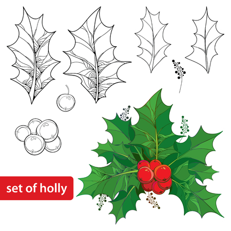 ilex: Vector set with outline leaves and berries of Ilex or European Holly isolated on white background. Traditional Christmas and Happy New Year symbol in contour style for winter design and coloring book.