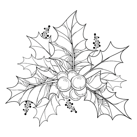 Vector branch with outline leaves and berries of Ilex or European Holly isolated on white background. Traditional Christmas and New Year symbol in contour style for winter design and coloring book.