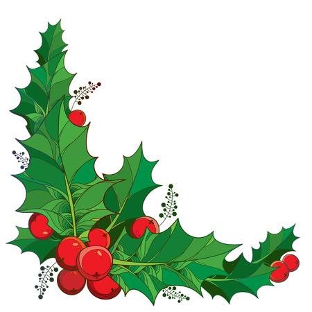 Vector takje met overzicht groene bladeren en rode bessen van Ilex of Europees Holly op een witte achtergrond. Traditionele kerst symbool in contour stijl voor de winter design. Hoek samenstelling.