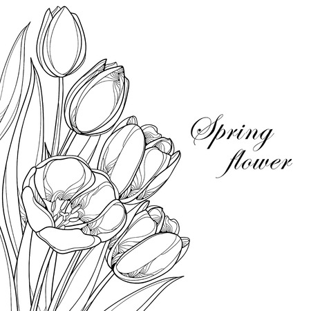 corner design: Vector bouquet with outline tulips flowers isolated on white. Ornate floral elements for spring design and coloring book. Corner composition with bunch of tulip flower in contour style.