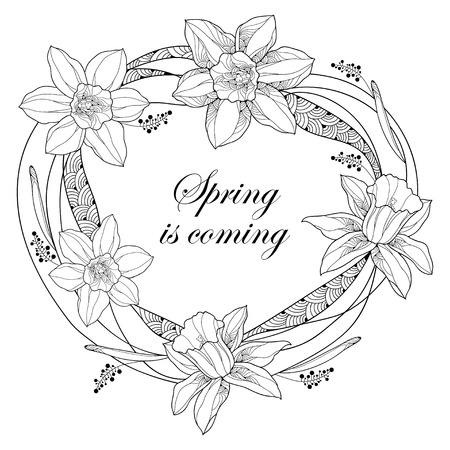 jonquil: Vector round frame with outline narcissus or daffodil flowers and ornate leaves isolated on white background. Floral elements for spring design and coloring book. Spring is coming in contour style.