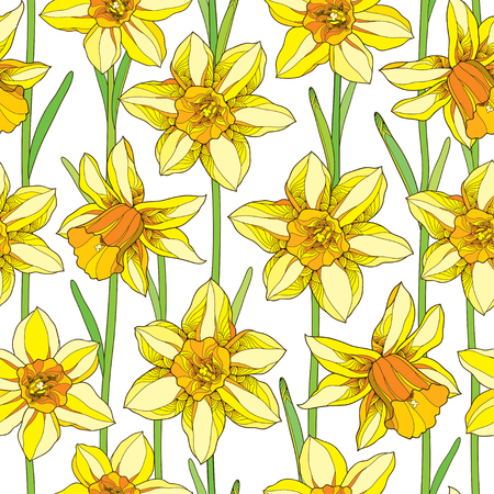 jonquil: Vector seamless pattern with outline narcissus or daffodil flower in orange and yellow with green foliage on the white background. Floral background with narcissus for spring design in contour style.
