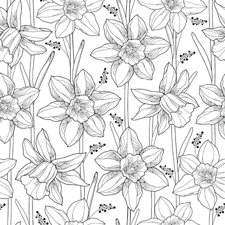 jonquil: Vector seamless pattern with outline narcissus or daffodil flower and leaves on the white background. Floral background with narcissus for spring design or adult coloring book in contour style.