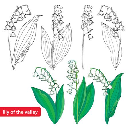 Set mit Umriss Lily of the Valley oder Convallaria Blumen und Blätter isoliert auf weiß.