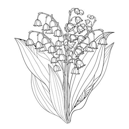 계곡 또는 Convallaria 꽃의 개요 릴리와 함께 꽃다발과 흰색에 고립입니다.
