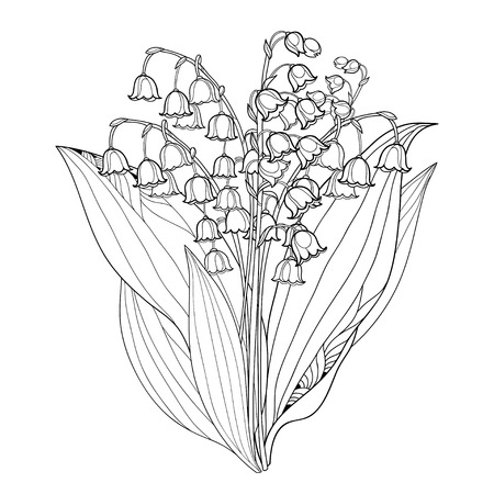 Bouquet with outline Lily of the valley or Convallaria flowers and leaves isolated on white.