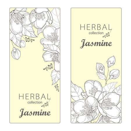 Vertical templates with outline Jasmine flowers, bud and leaves on the light yellow background.