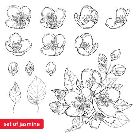 Set with outline Jasmine flowers, bud and leaves in black isolated on white background. Vectores