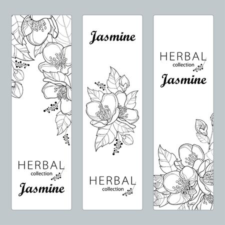 Templates with outline Jasmine flowers, bud and leaves isolated on white background. Illustration
