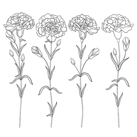 Set with outline Carnation or Clove flower, bud and leaves in black isolated on white background. Vettoriali