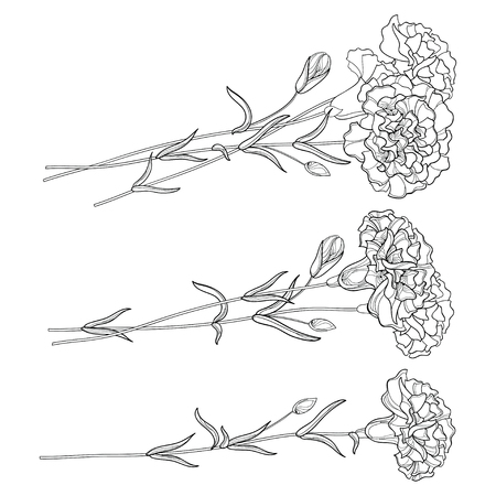 Set with outline Carnation. Flower, bud and leaves in black isolated on white background.