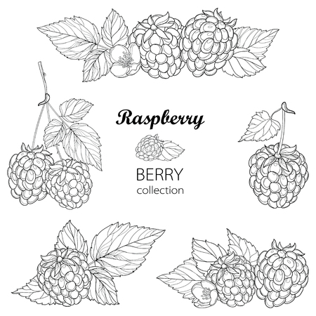 Set with outline Raspberry bunch, berry, flower and leaves in black isolated on white background. Composition with raspberry fruits in contour style for summer design and coloring book.
