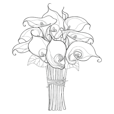 Bouquet with Calla lily flower or Zantedeschia with leaves in black isolated on white background. Floral elements in contour style with ornate calla for summer design and coloring book.