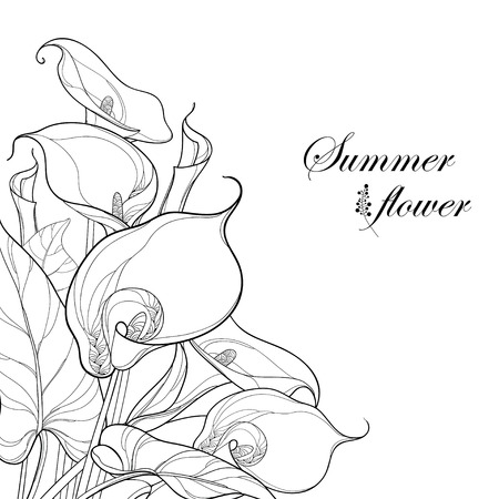 Bouquet with Calla lily flower or Zantedeschia in black isolated on white background. Corner composition in contour style with ornate calla and foliage for summer design and coloring book.