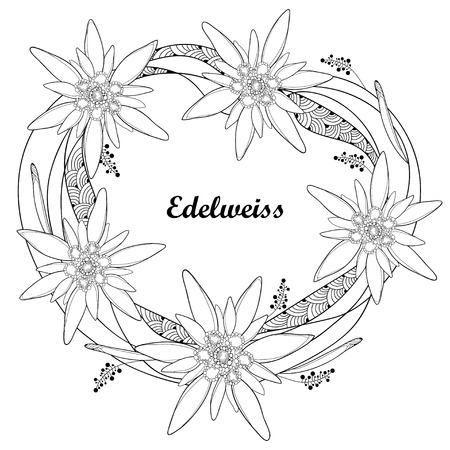Ornate round wreath with outline Edelweiss or Leontopodium alpinum flower isolated on white. Symbol of Alp Mountains in contour style. Alpine mountain flower for summer design and coloring book.