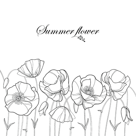 Horizontal border with outline Poppy flower and bud in black isolated on white background. Floral elements in contour style with poppy for summer design and coloring book. Symbol of Remembrance Day.