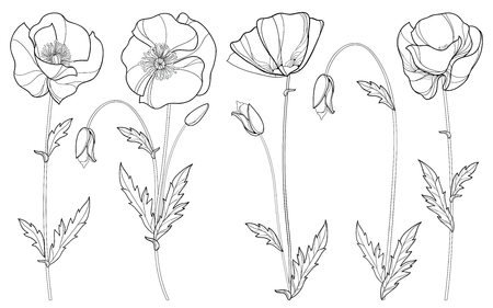 Set with outline Poppy flower, bud and leaves in black isolated on white background. Floral elements in contour style with poppy for summer design and coloring book. Symbol of Remembrance Day. Illustration