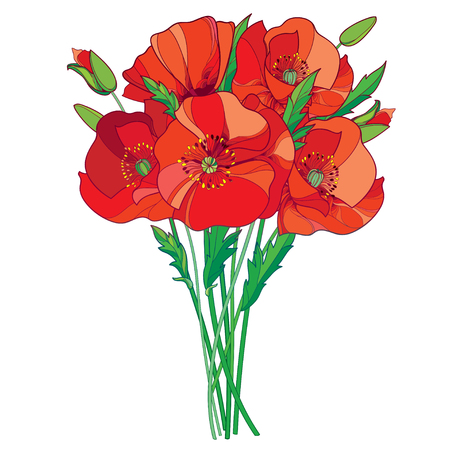 Bouquet with outline red Poppy flower, bud and green leaves isolated on white background. Floral elements in contour style with poppy for summer design. Symbol of Remembrance Day.