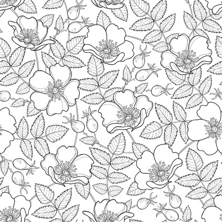 Seamless pattern with outline. Flower, hips and leaves on the white background. Rosehip pattern in contour style for summer design, medicine, homeopathy, coloring book.