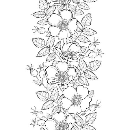 Nahtlose Muster mit Umriss. Blume, Hüften und Blätter auf dem weißen Hintergrund. Hagebuttenmuster im Konturstil für Sommerdesign, Medizin, Homöopathie, Malbuch.