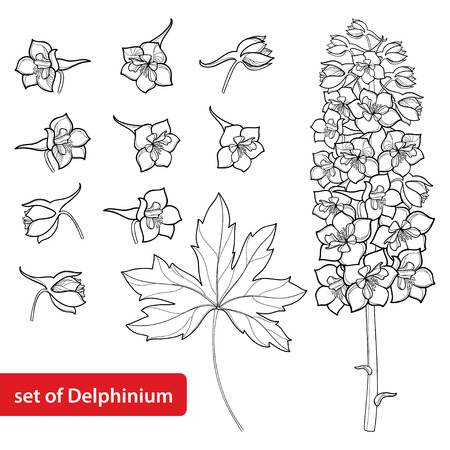 Set with Delphinium or Larkspur. Flower, bunch, bud and leaf in black isolated on white. Floral elements in contour style with ornate Delphinium for summer design and coloring book.