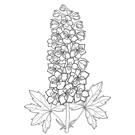 Bunch with Delphinium or Larkspur. Flower, stem, bud and leaf in black isolated on white background. Floral details in contour style with ornate Delphinium for summer design and coloring page.