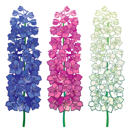 Set with Delphinium or Larkspur. Bunch with flower in blue, pink and pastel white color isolated on white background. Floral elements in contour style with ornate Delphinium for summer design. Ilustração