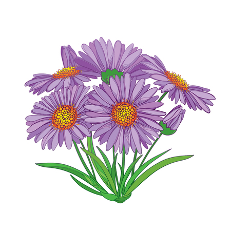 Bouquet with outline Alpine aster flower in purple, bud and green leaf isolated on white background. Ornamental mountain flower in contour style for summer design.