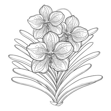 Contorno Flor De Orquídea Vanda Aislado Sobre Fondo Blanco. Flor ...