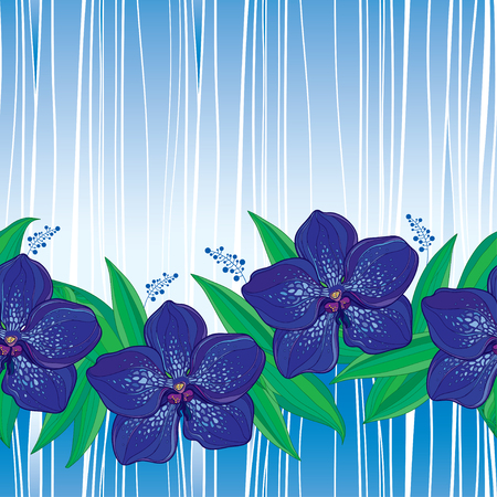Seamless pattern with outline Vanda orchid flower in blue and green leaves on the striped background. Floral pattern with Vanda tropical flower in contour style for exotic summer design.