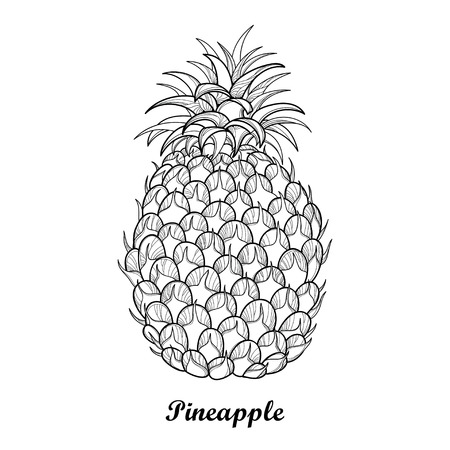 Drawing with outline Ananas or Pineapple fruit and leaf in black isolated on white background. Perennial tropical plant in contour style for summer design, juicy fresh menu and coloring book. Illustration