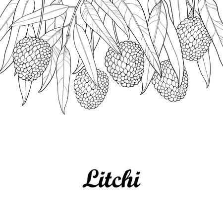 Gros plan avec le Lychee chinois ou le fruit et la feuille Litchi isolés sur fond blanc. Arbre subtropical pérenne en style contour pour la conception estivale, menu frais et carnets à colorier juteux. Banque d'images - 81308247
