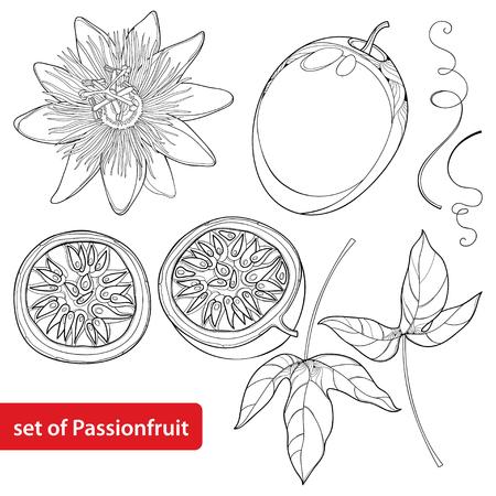 Mettre en évidence les fruits de la passion ou Maracuya. Une demi-fruit, une feuille et une fleur isolées sur fond blanc. Plante végétale pérenne en style contour pour un design exotique et un tableau à colorier d'été. Vecteurs