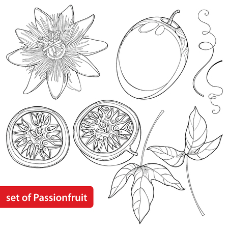 Set met omtrek Passievrucht of Maracuya. Half fruit, blad en bloem die op witte achtergrond wordt geïsoleerd. Meerjarige tropische plant in contourstijl voor exotische zomer ontwerp en kleurboek.