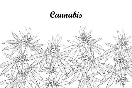 Field with outline Cannabis sativa or Cannabis indica or Marijuana. Branch, leaves and seed isolated on white background. Medicinal plant in contour style for summer design and coloring book. Stock Illustratie