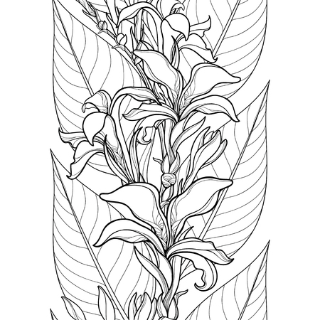 Seamless pattern with outline Canna lily or Canna flower and leaves on the white background. Floral pattern in contour style with ornate flowers for tropical summer design and coloring book.