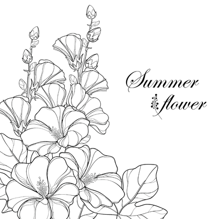 Bouquet with outline Alcea rosea or Hollyhock flower, bud and leaf isolated on white background. Corner composition in contour style with ornate Hollyhock for summer design and coloring book. Ilustracja