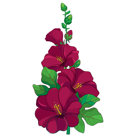 Bunch with outline Alcea rosea or Hollyhock flower, stem, bud and green leaf isolated on white background. Floral elements in contour style with ornate crimson Hollyhock for summer design.