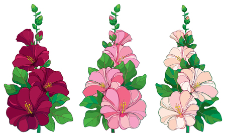 Bunch with outline Alcea rosea or Hollyhock flower in pink and white, bud and green leaf isolated on white background. Floral set in contour style with ornate Hollyhock for summer design. Ilustração