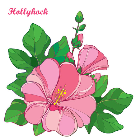 Bunch with outline Alcea rosea or Hollyhock flower in pastel pink, bud and green leaf isolated on white background. Floral elements in contour style with ornate Hollyhock for summer design.