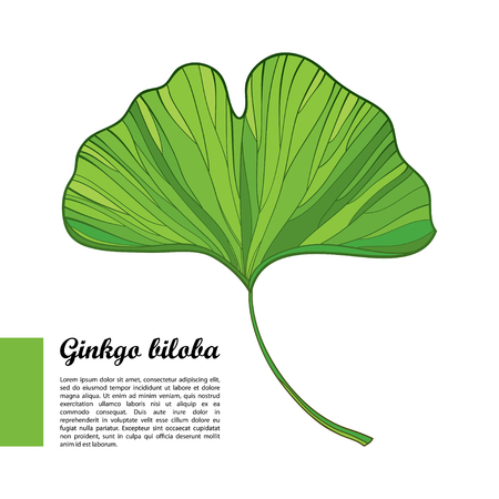 Outline green leaf of Gingko or Ginkgo biloba tree isolated on white background. Gymnosperms relict plant in contour style for exotic summer design. Çizim