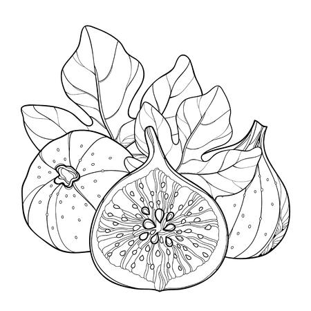 概要一般的なイチジクとイチジク カリカセラピ組成物。熟した果実のスライス、白い背景で隔離の葉。エキゾチックな夏のデザインと塗り絵の輪郭