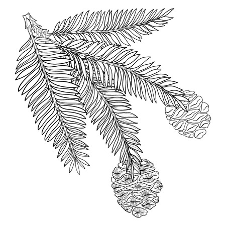 Branch with outline Sequoia or California redwood in black isolated on white background. Branch of coniferous tree with pine and cones in contour style for botanical design and coloring book.