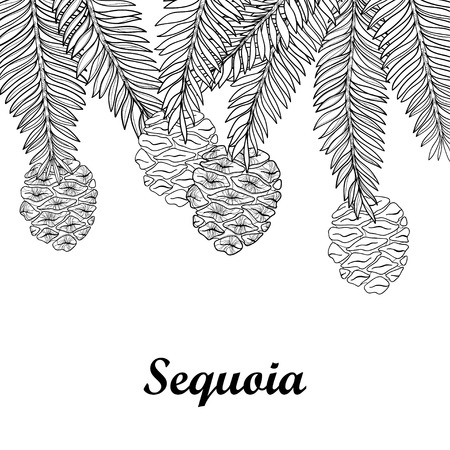 Branch with outline Sequoia or California redwood isolated on white background. Bunch of coniferous tree with pine and cones in contour style for botanical design and coloring book.