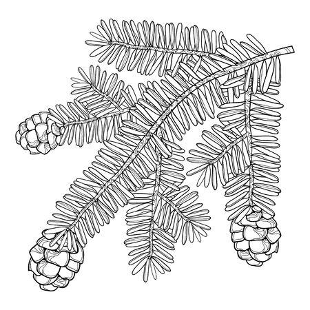 개요와 함께 지점 Tsuga 또는 흰색 배경에 고립 된 검은 색에서 동부 헴. 침 엽 수 독 소나무와 콘 식물 디자인 및 색칠하기 책 컨투어 스타일.