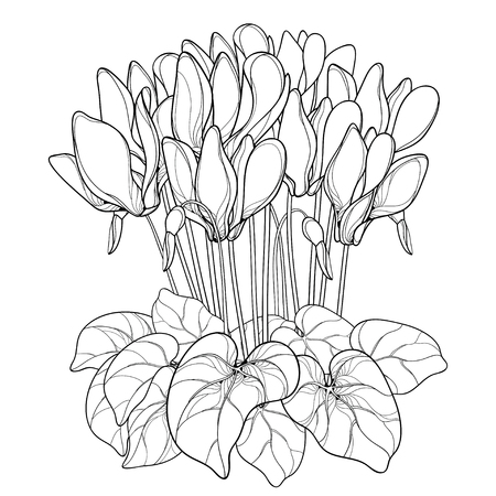 Bouquet with outline Cyclamen or Alpine violet flower, bud and leaf in black isolated on white background. Perennial Alpine mountain flower in contour style for spring design and coloring book.